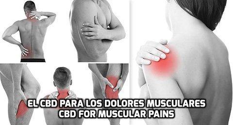 El CBD para Dolores Musculares