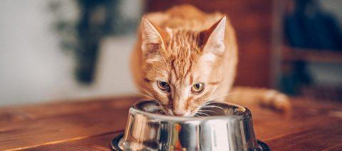Hemp Oil Nutrition for Pets