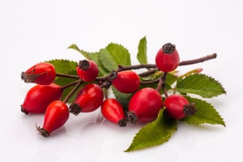 Moisturizing Cream (50ml) - Canalanza Natural Cosmetic Line